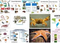 Invertebrate Animal